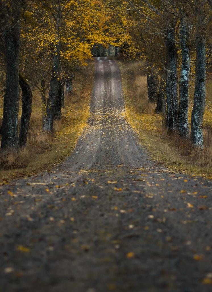 Beautiful Autumn Swedish Photography 746x1024 Stunning Swedish Nature Photography Captured by Magnus Dovline