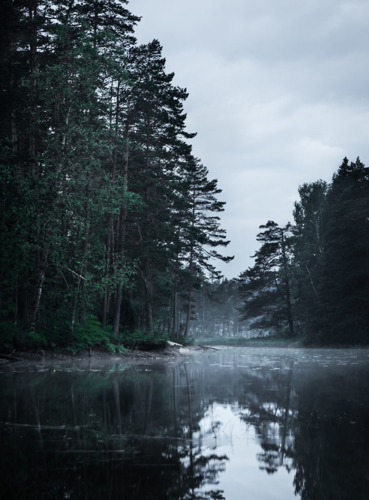 Beauty Swedish Forest Photography 757x1024 Stunning Swedish Nature Photography Captured by Magnus Dovline