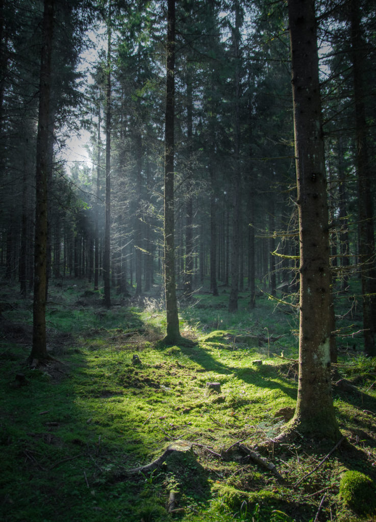 Beauty Swedish Forest Photography Captured by Magnus Dovline 737x1024 Stunning Swedish Nature Photography Captured by Magnus Dovline