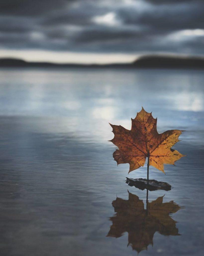Beauty Swedish Nature Photography 99 819x1024 Stunning Swedish Nature Photography Captured by Magnus Dovline