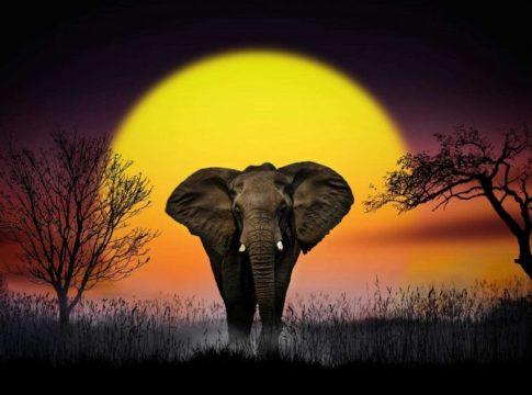 Wonderful Dreamlike Animals Photography by Nasser Osman