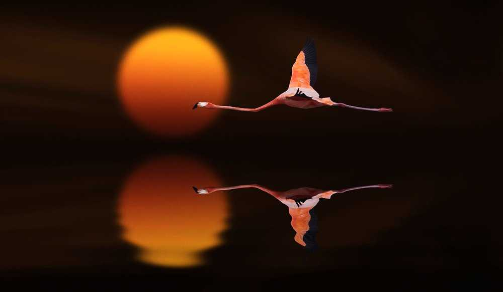 Dreamlike Animals Photography by Nasser Osman Wonderful Dreamlike Animals Photography by Nasser Osman