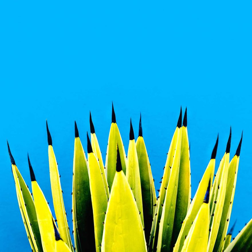 Minimalist and Colorful Cactus Photography 3 Minimalist and Colorful Cactus Photography by Evgeniya Porechenskaya