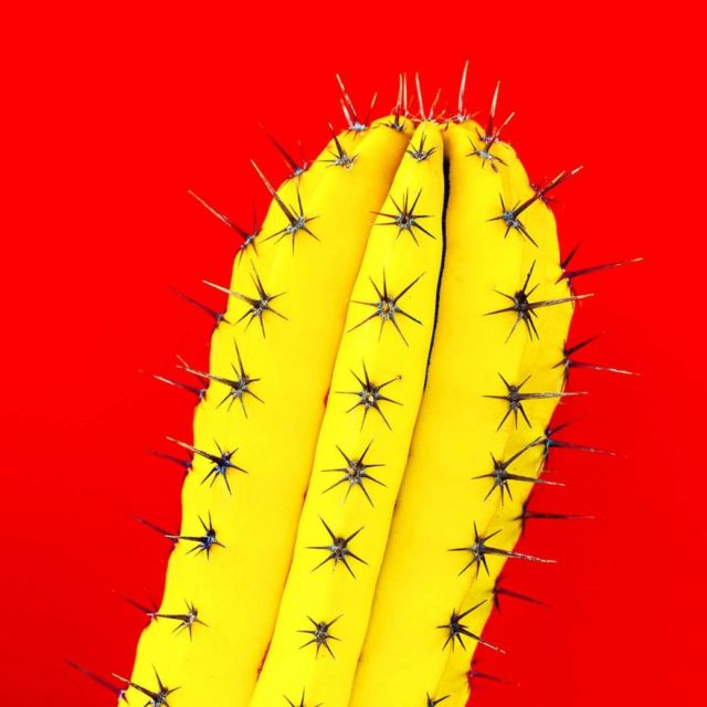 Minimalist and Colorful Cactus Photography by Evgeniya Porechenskaya
