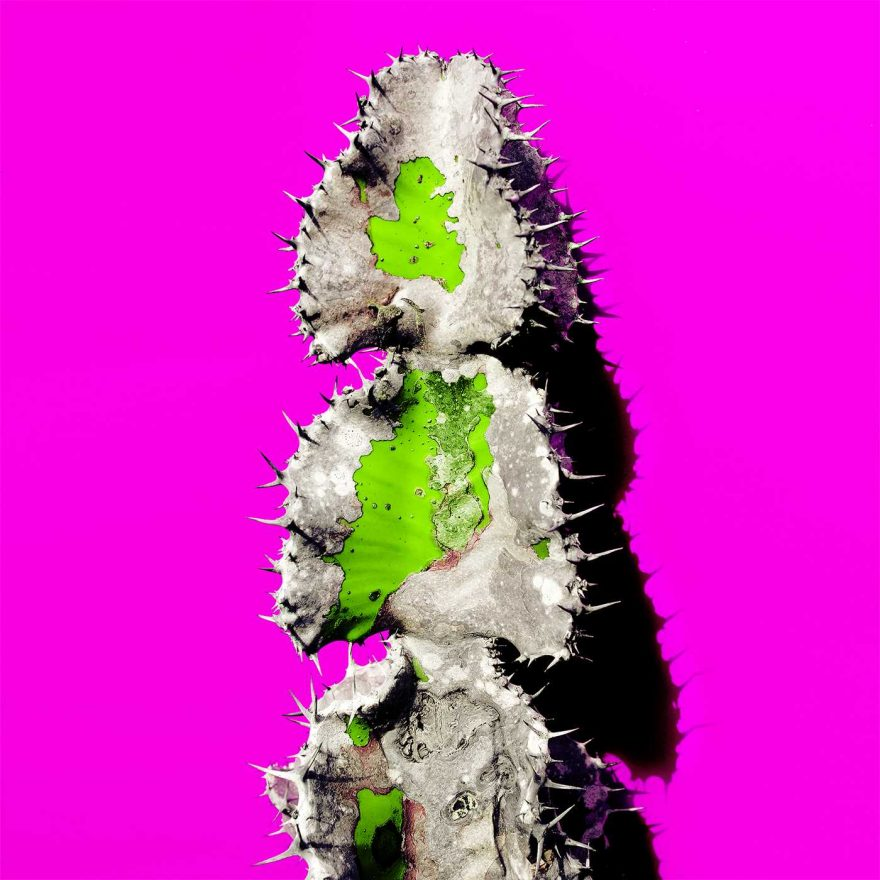Minimalist and Colorful Cactus Photography 7 Minimalist and Colorful Cactus Photography by Evgeniya Porechenskaya