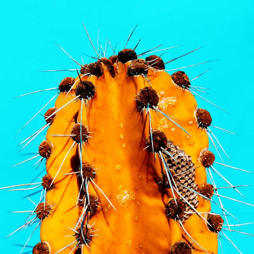Minimalist and Colorful Cactus Photography 8 Minimalist and Colorful Cactus Photography by Evgeniya Porechenskaya