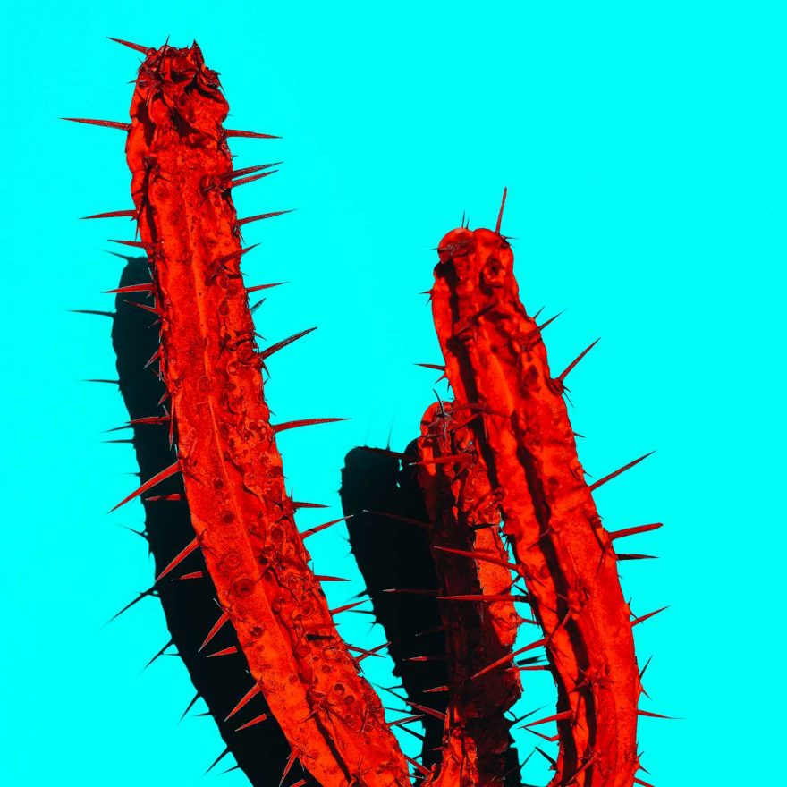 Minimalist and Colorful Cactus Photography Minimalist and Colorful Cactus Photography by Evgeniya Porechenskaya