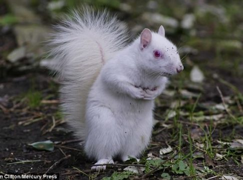 Rare Albino Squirrel Is Photographed by Tim Clifton