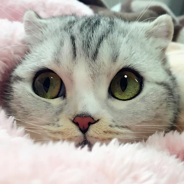 The Most Beautiful Cat Meet Hana, A Japanese Kitty With the Most Beautiful Eyes