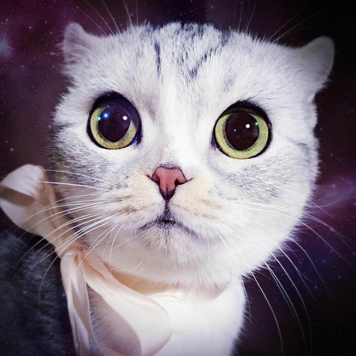 The Most Beautiful Japanese Kitty Eyes 4 Meet Hana, A Japanese Kitty With the Most Beautiful Eyes