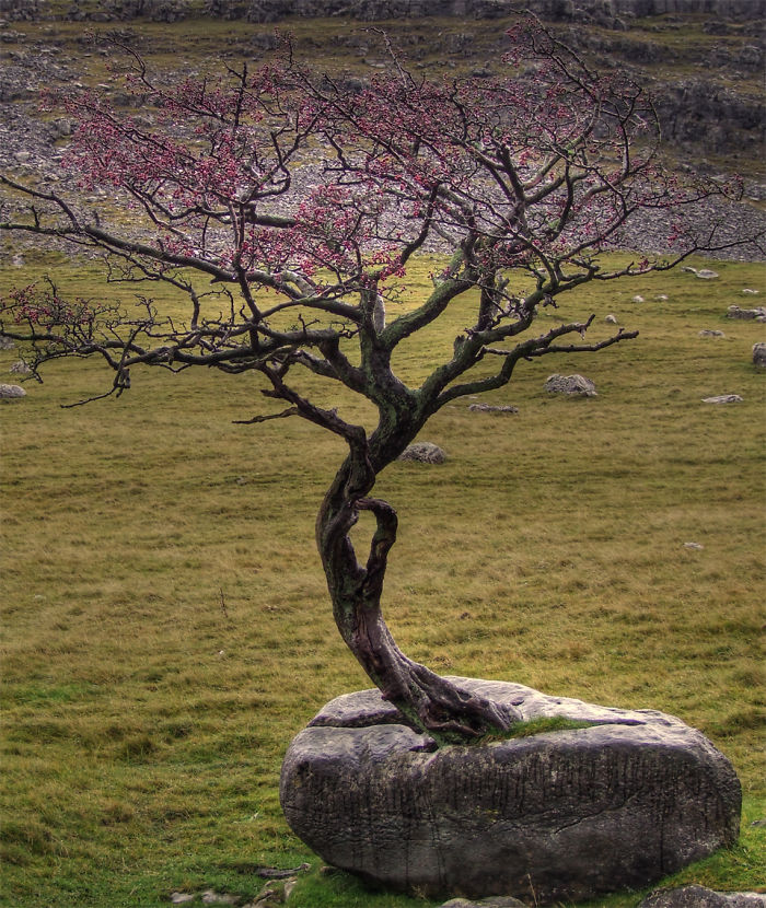 Nature FTW 10+ Badass Trees That Refuse To Die No Matter What