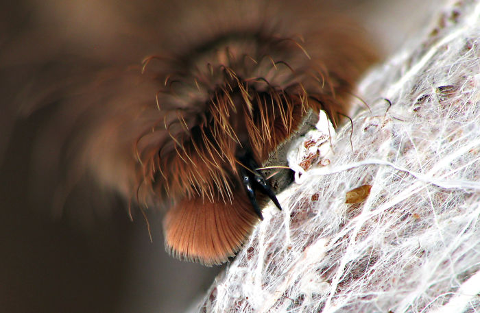 Cute Spider Paws Photo 17 Turns Out, Spiders Have Tiny Paws, And It May Change The Way You Look At Them