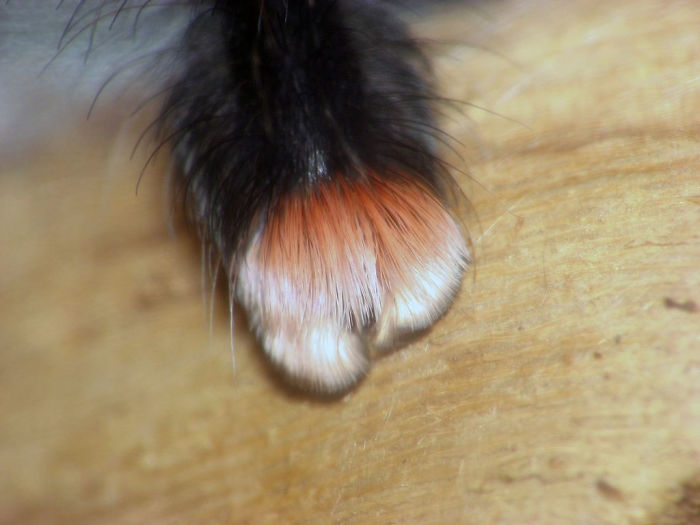 Cute Spider Paws Photo 3 Turns Out, Spiders Have Tiny Paws, And It May Change The Way You Look At Them