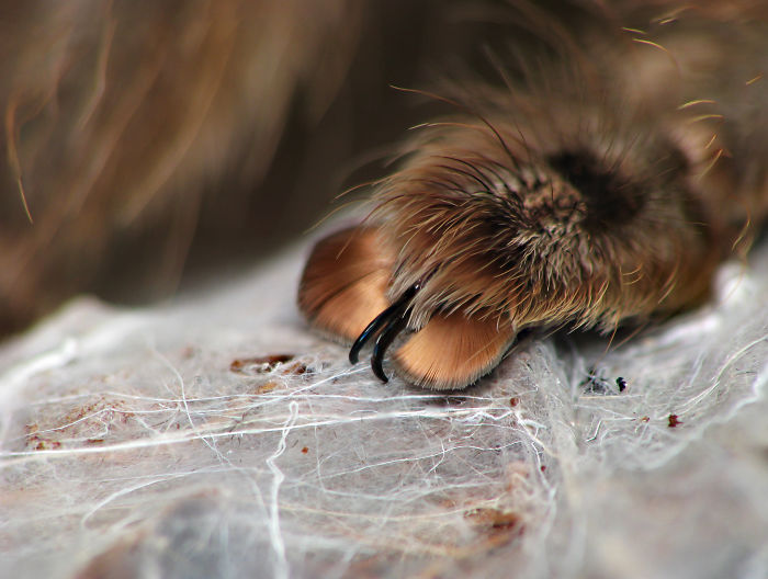 Cute Spider Paws Photo 7 Turns Out, Spiders Have Tiny Paws, And It May Change The Way You Look At Them