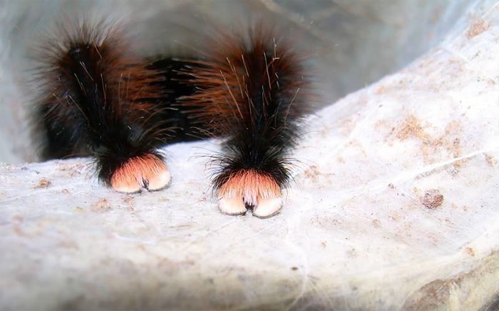 Cute Spider Paws Photo Turns Out, Spiders Have Tiny Paws, And It May Change The Way You Look At Them