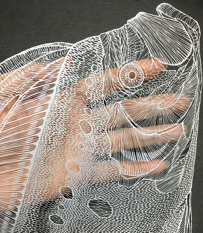 Stunning Paper Cuts Swirling Forms Of Nature by Kiri Ken 2 Detailed Paper Cuts Swirling Forms Of Nature by Kiri Ken