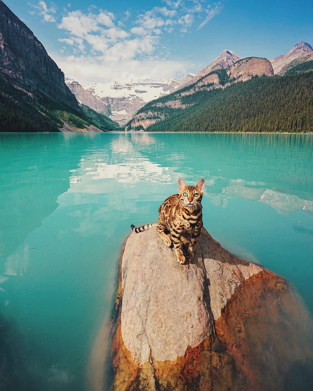 Wonderful Adventures Suki the Cat Canada 1