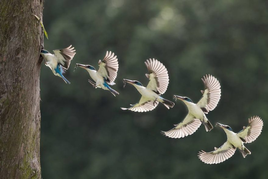Beautiful Bird Photography by Johnson Chua 4 Beautiful Bird Photography by Johnson Chua