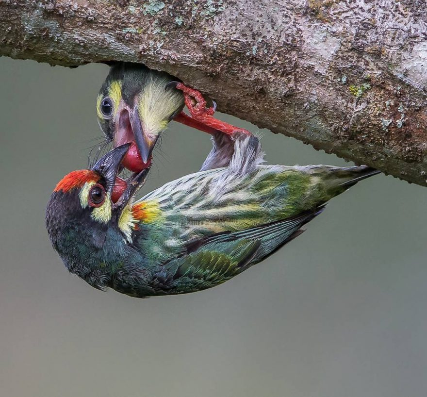 Beautiful Bird Photography by Johnson Chua 5 Beautiful Bird Photography by Johnson Chua