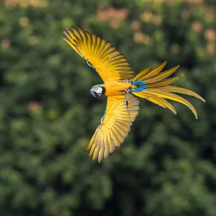 Beautiful Bird Photography by Johnson Chua 9 Beautiful Bird Photography by Johnson Chua