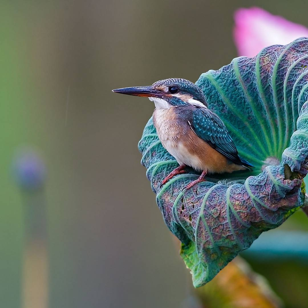 Beautiful Bird Photography by Johnson Chua