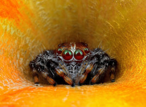 Hypnotizing Macro Photos of Exotic Spiders Staring Directly into Your Mind