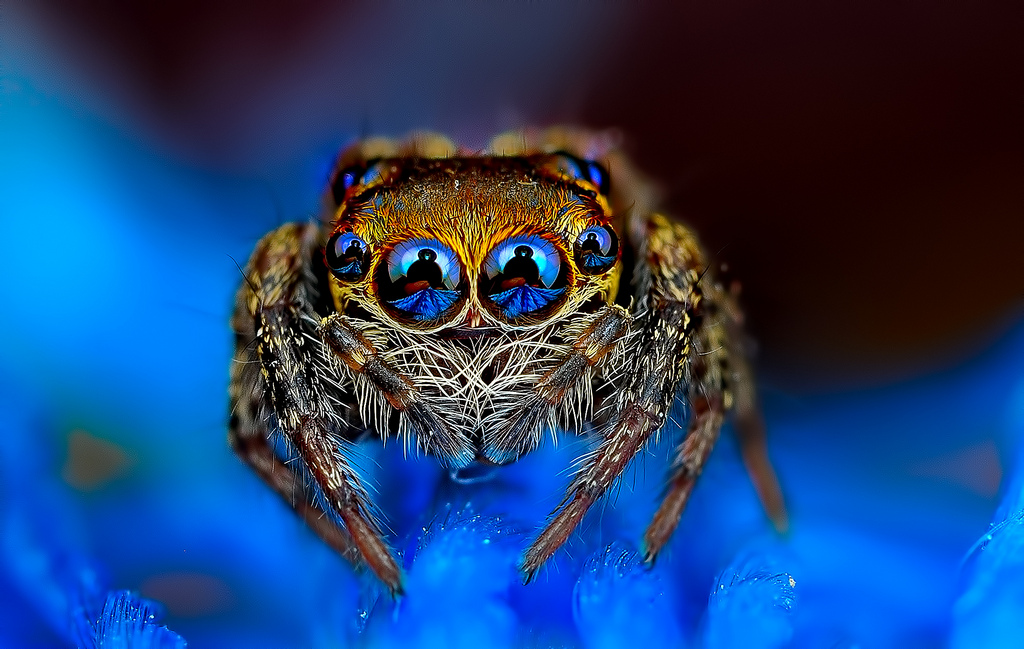 Beautiful Macro Photos of Exotic Spiders Hypnotizing Macro Photos of Exotic Spiders Staring Directly into Your Mind