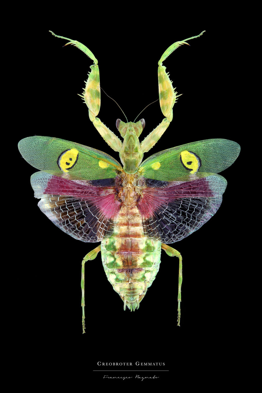 Beautiful Pictures of Colorful Insects 1 Beautiful Pictures of Colorful Insects