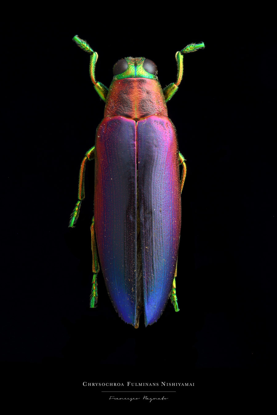 Beautiful Pictures of Colorful Insects 4 Beautiful Pictures of Colorful Insects