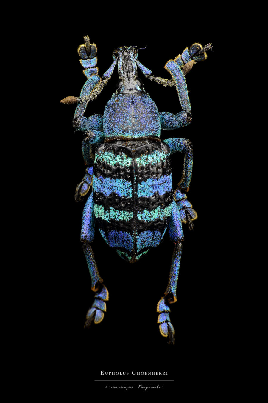 Beautiful Pictures of Colorful Insects 5 Beautiful Pictures of Colorful Insects