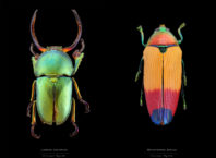 Beautiful Pictures of Colorful Insects