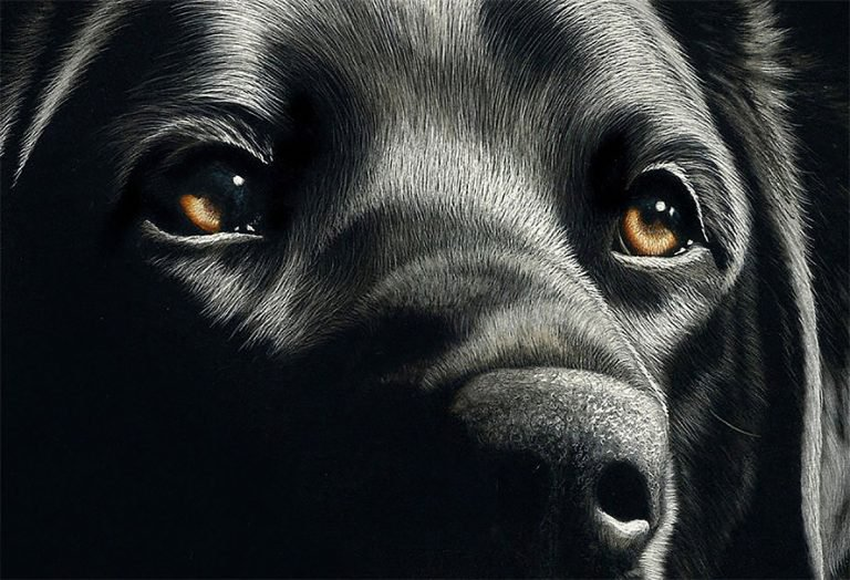 Hyper Realistic Scratchboard Illustrations by Cathy Sheeter 1 Hyper Realistic Scratchboard Illustrations by Cathy Sheeter