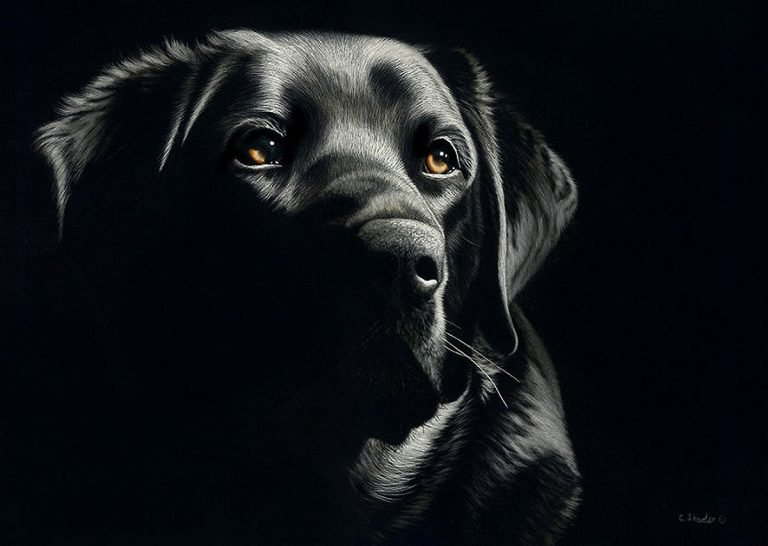 Hyper Realistic Scratchboard Illustrations by Cathy Sheeter 2 Hyper Realistic Scratchboard Illustrations by Cathy Sheeter
