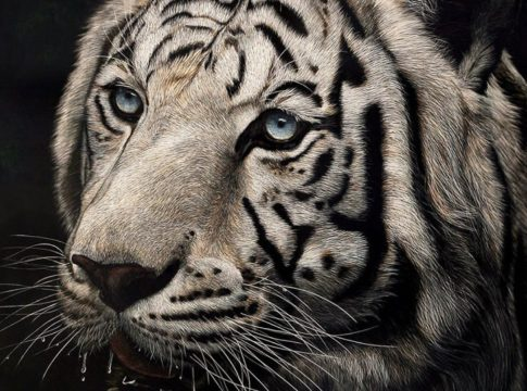 Hyper-Realistic Scratchboard Illustrations by Cathy Sheeter