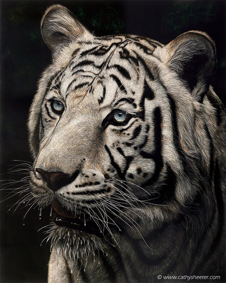 Hyper Realistic Scratchboard Illustrations by Cathy Sheeter 5 Hyper Realistic Scratchboard Illustrations by Cathy Sheeter