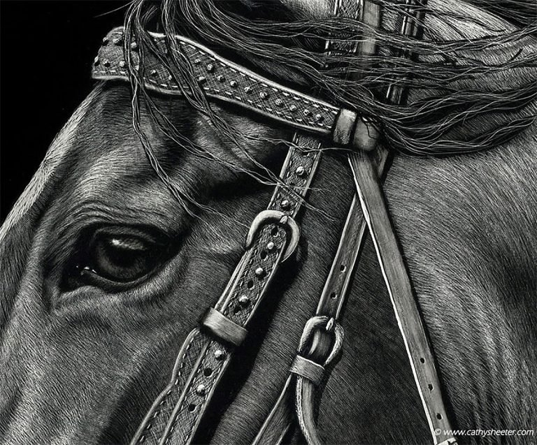 Hyper Realistic Scratchboard Illustrations by Cathy Sheeter 7 Hyper Realistic Scratchboard Illustrations by Cathy Sheeter