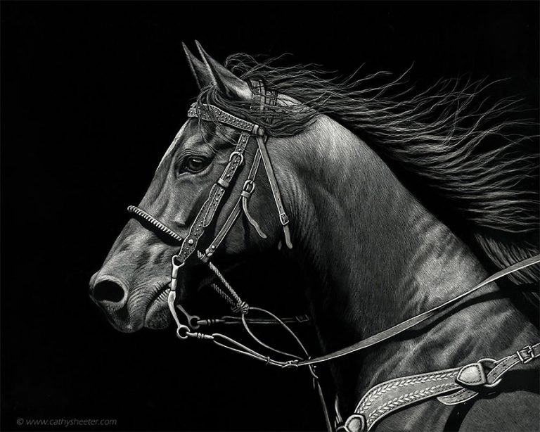 Hyper Realistic Scratchboard Illustrations by Cathy Sheeter 8 Hyper Realistic Scratchboard Illustrations by Cathy Sheeter