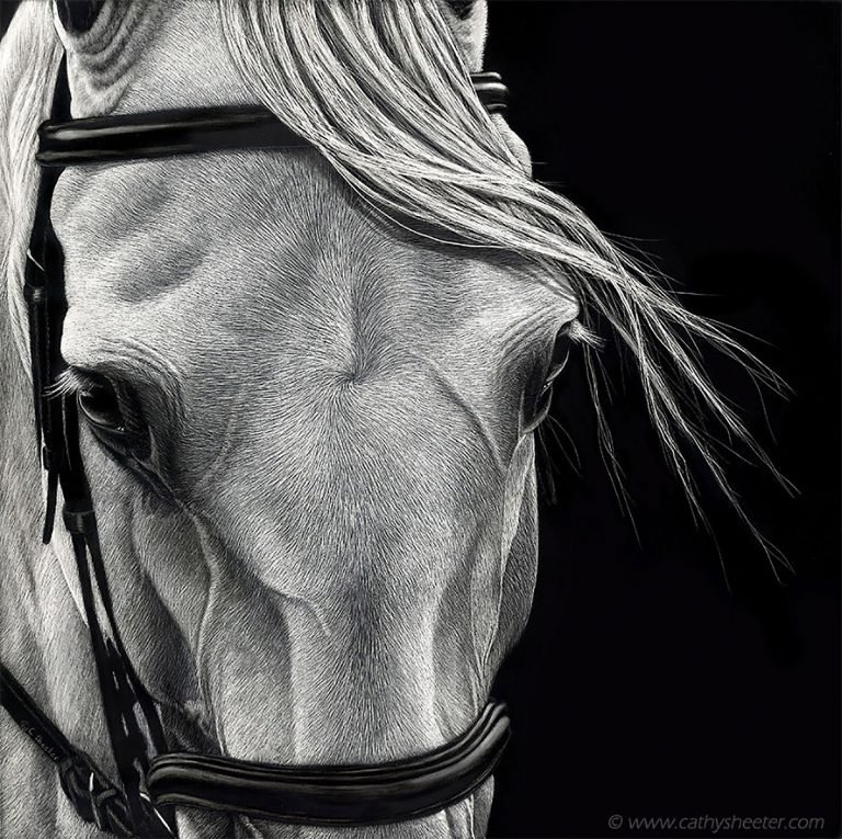 Hyper Realistic Scratchboard Illustrations by Cathy Sheeter 9 Hyper Realistic Scratchboard Illustrations by Cathy Sheeter