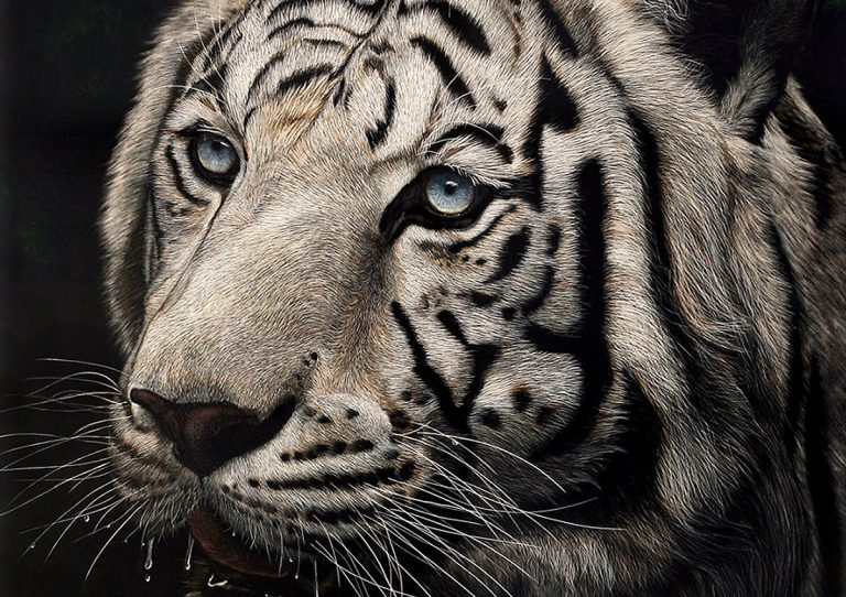 Hyper Realistic Scratchboard Illustrations by Cathy Sheeter Hyper Realistic Scratchboard Illustrations by Cathy Sheeter
