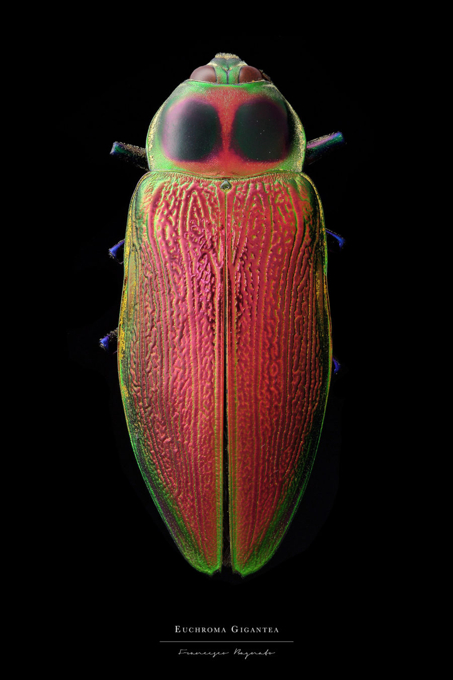 Stunning Pictures of Colorful Insects 4 Beautiful Pictures of Colorful Insects