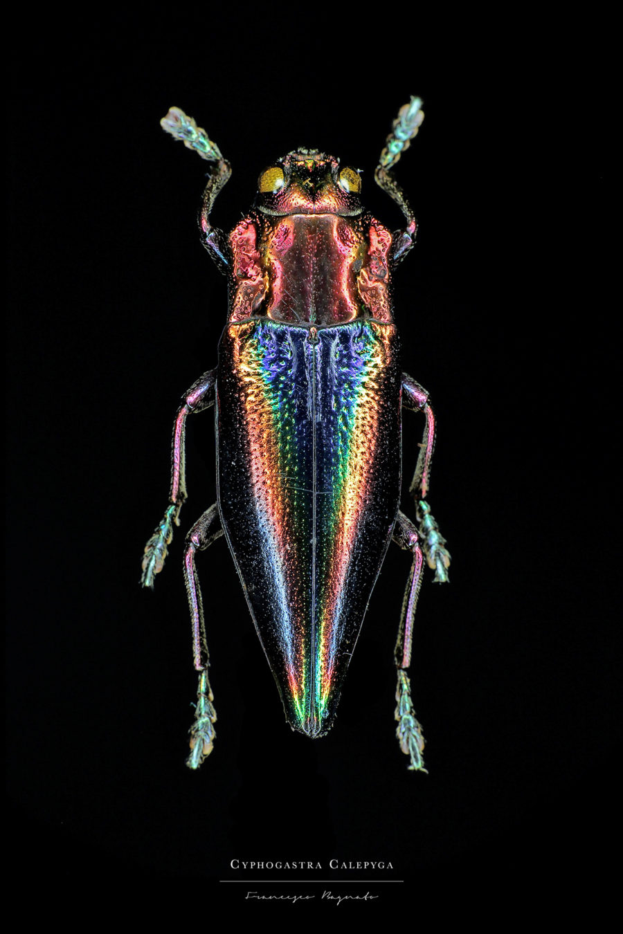 Stunning Pictures of Colorful Insects 6 Beautiful Pictures of Colorful Insects