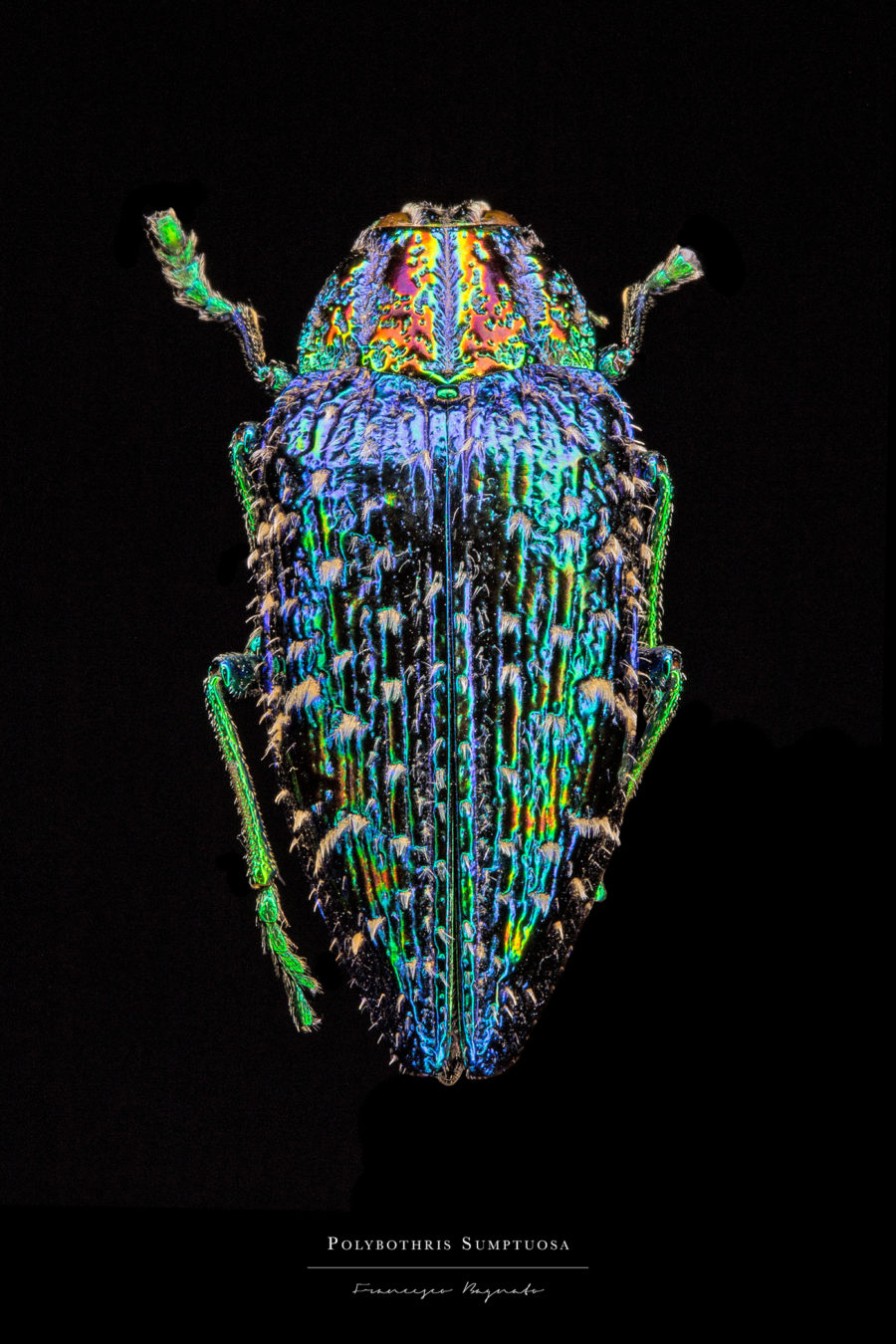 Stunning Pictures of Colorful Insects 7 Beautiful Pictures of Colorful Insects