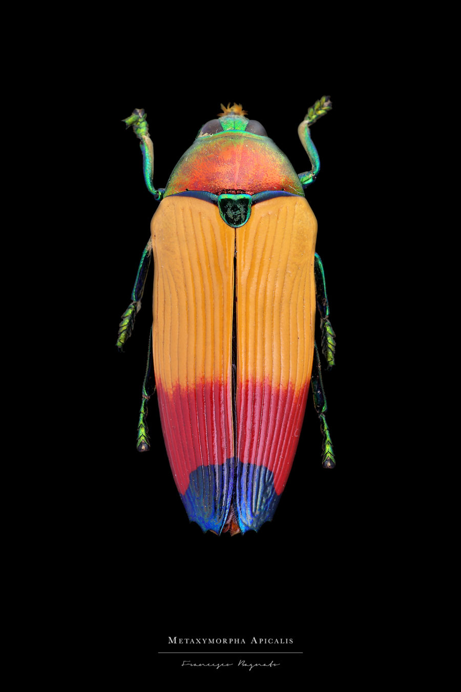 Stunning Pictures of Colorful Insects Beautiful Pictures of Colorful Insects