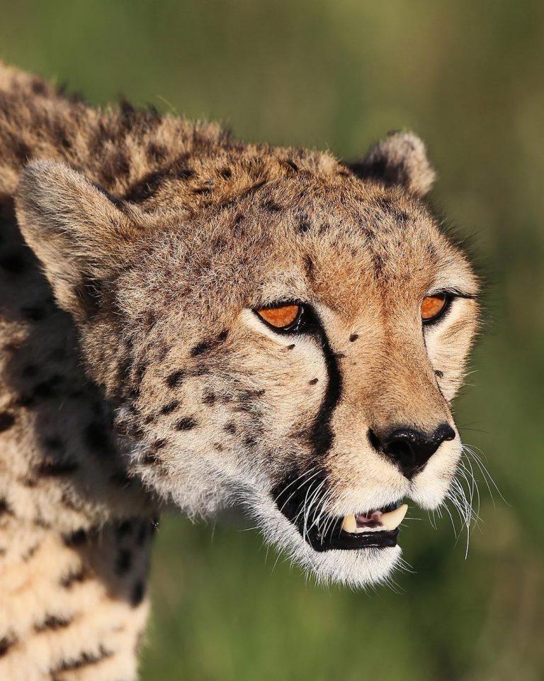 Beautiful Close Up Portraits of Wild Animals 1 Wonderful Close Up Portraits of Wild Animals by Serhat Demiroglu