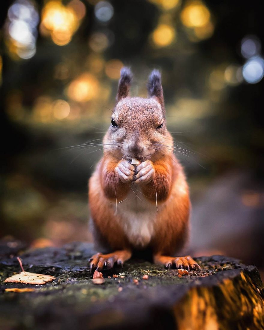 Cute Wild Animal Portraits by Ossi Saarinen Cute Wild Animal Portraits by Ossi Saarinen