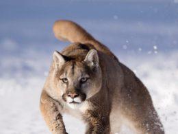 Wonderful Close-Up Portraits of Wild Animals by Serhat Demiroglu