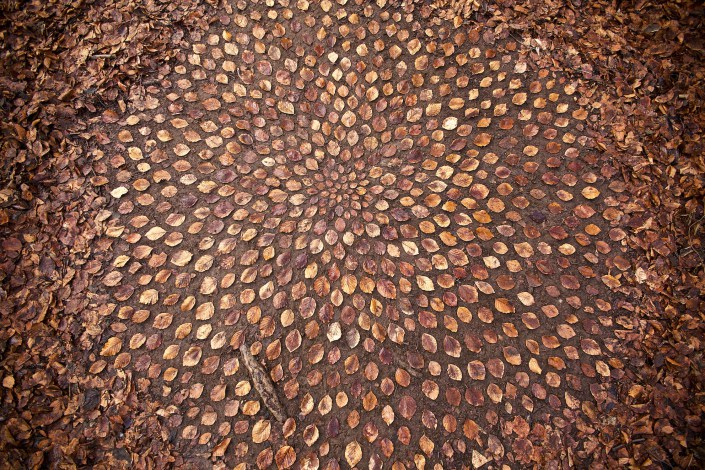 James Brunt creates elaborate ephemeral artworks 1 James Brunt Organizes Leaves and Rocks Into Elaborate Cairns and Mandalas