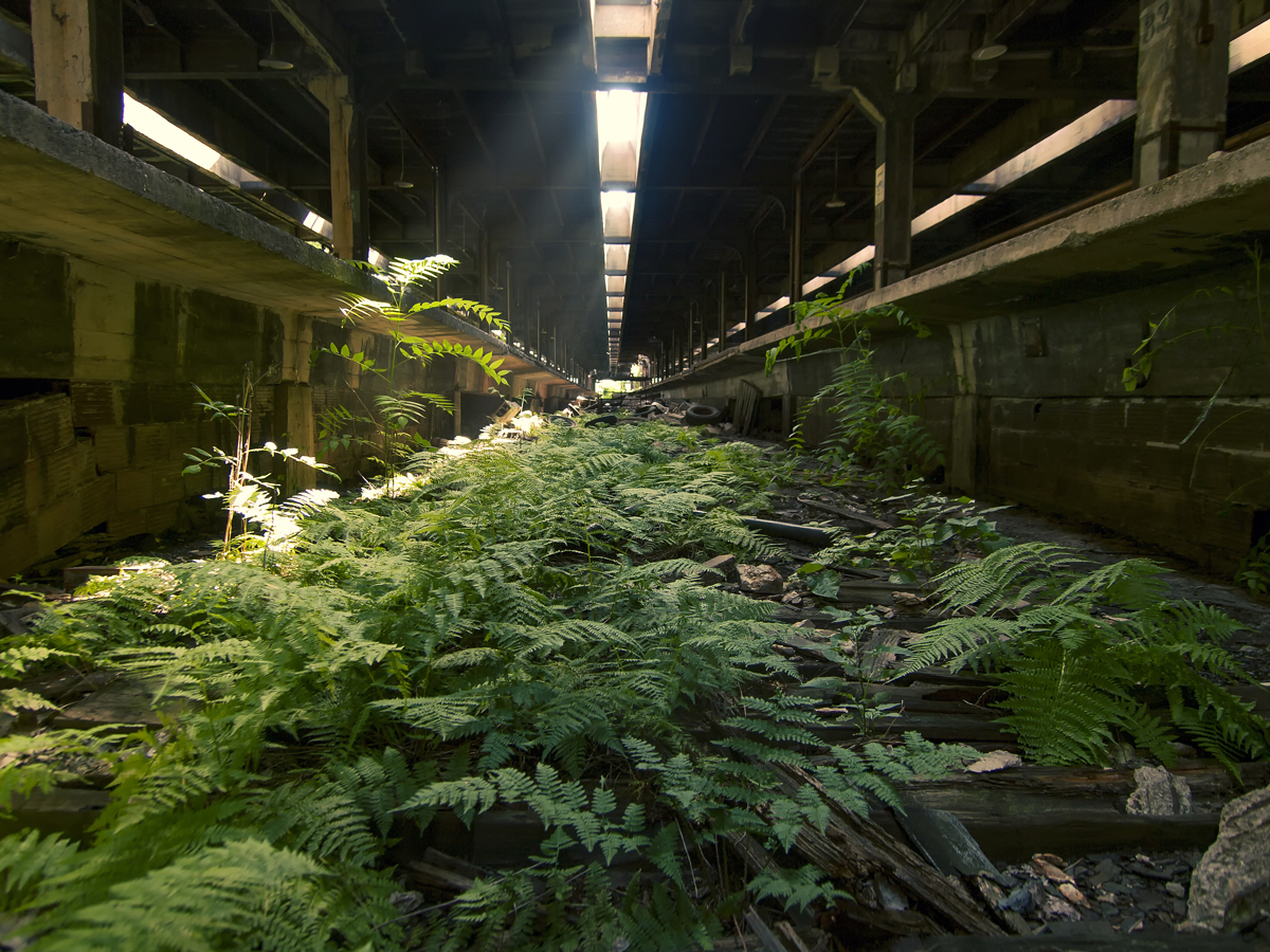 Johnny Joo Photographs Forgotten Structures Overtaken by Nature 6 Johnny Joo Photographs Forgotten Structures Overtaken by Nature
