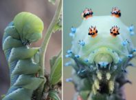 Radically Unusual Caterpillars Captured by Photographer Igor Siwanowicz