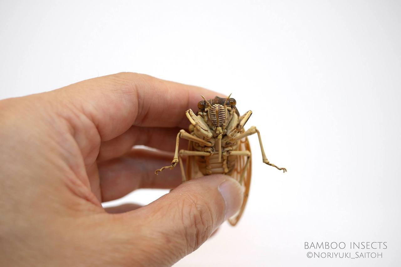 Incredibly Lifelike Insects Crafted out of Bamboo by Noriyuki Saitoh 1 Incredibly Lifelike Insects Crafted out of Bamboo by Noriyuki Saitoh